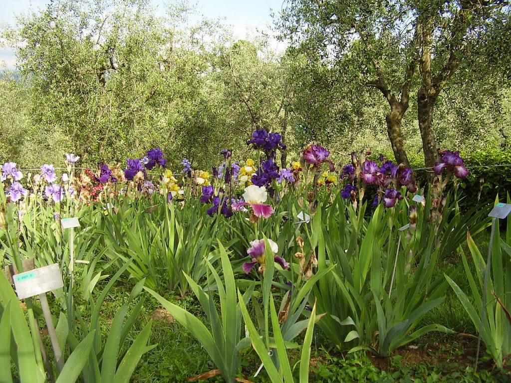 Il Giardino dell'iris a firenze, tra le cose da vedere in città.